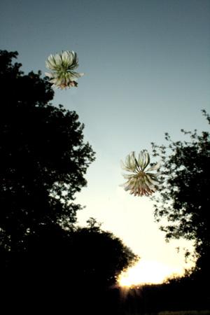 http://oleanna.de/files/gimgs/11_organic-botanic-1-klee.jpg