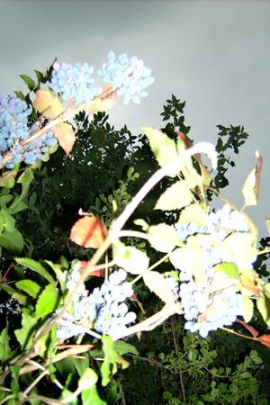 http://oleanna.de/files/gimgs/11_organic-botanic-3-busch.jpg