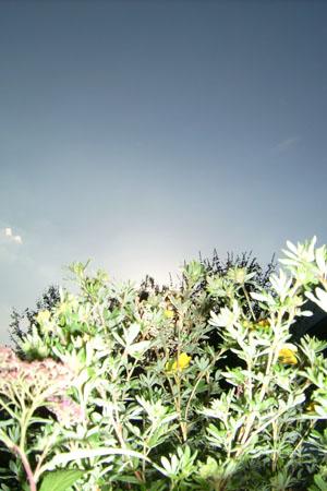 http://oleanna.de/files/gimgs/11_organic-botanic-3-kraut.jpg