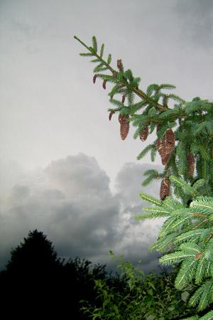 http://oleanna.de/files/gimgs/11_organic-botanic-3-tanne.jpg